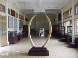 Bảo Tàng Hải Phòng 1