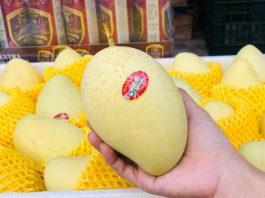 hoa quả nhập khẩu hải phòng